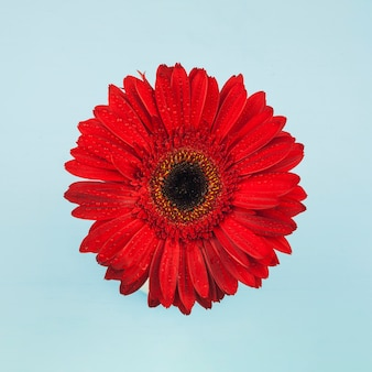 Vista en planta de una flor roja