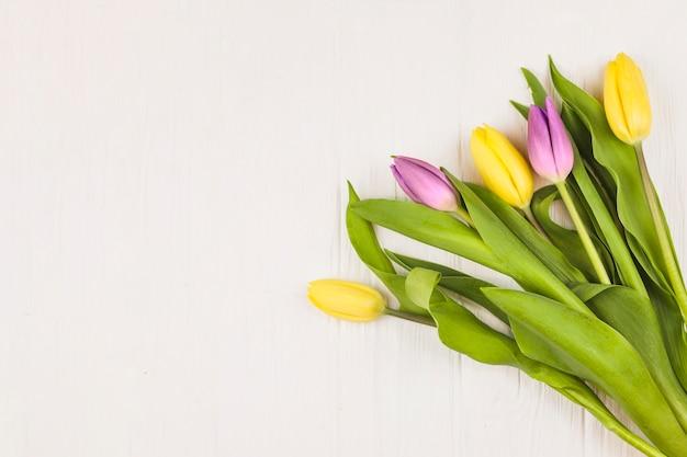 Vista en planta de tulipanes frescos