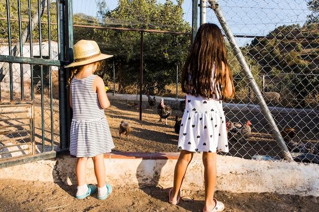 Vista posterior de dos niñas de pie fuera de la granja de pollos