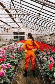 Vista posterior de un jardinero de pie cerca de coloridas flores en invernadero