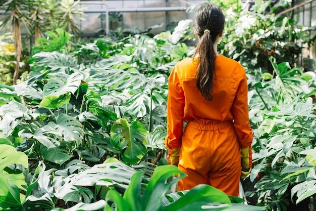 Vista posterior de un jardinero de sexo femenino en la ropa de trabajo que se coloca en el invernadero