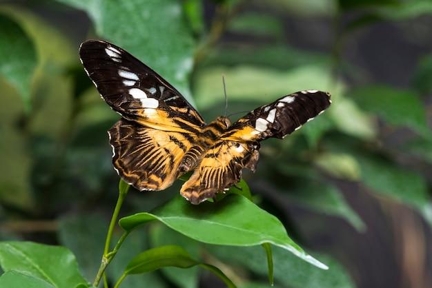 Vista posterior de la mariposa en la hoja