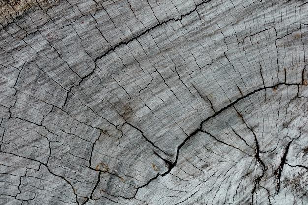Vista de primer plano de madera seca