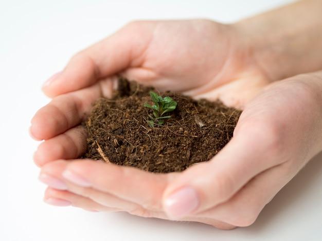 Vista de primer plano de manos sosteniendo tierra y planta
