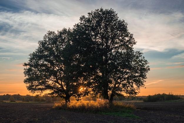 La vista de la puesta de sol a través de los árboles en el campo.