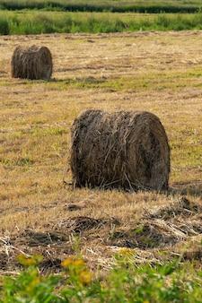 Vista de rollos dorados de heno en campo segado, paisaje rural en día soleado, clima seco en el que el trabajo agrícola es bueno.