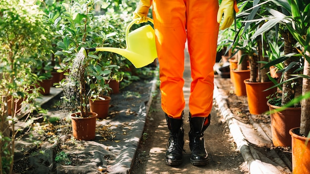 Vista en sección baja de un jardinero regando plantas en maceta