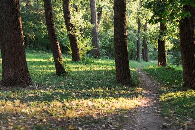 Vista de un sendero vacío en el bosque verde