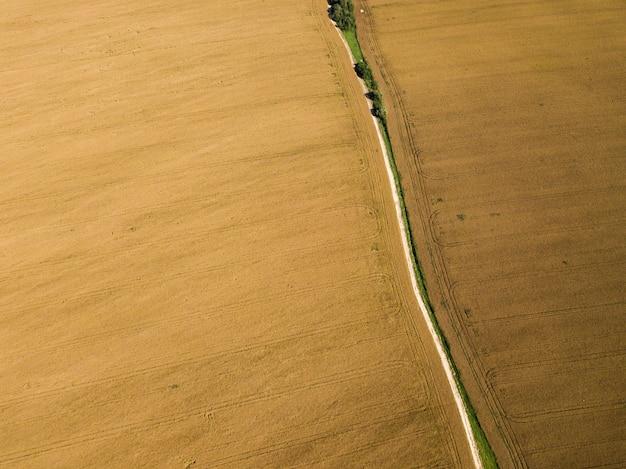 Vista superior del abejón aéreo gran campo de colza madura dorado en luz brillante de verano. industria agrícola
