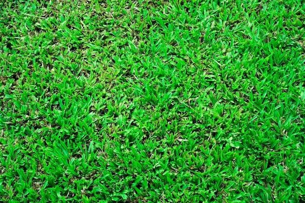 Vista superior abstracta de color verde de textura de fondo de hierba, para el fondo