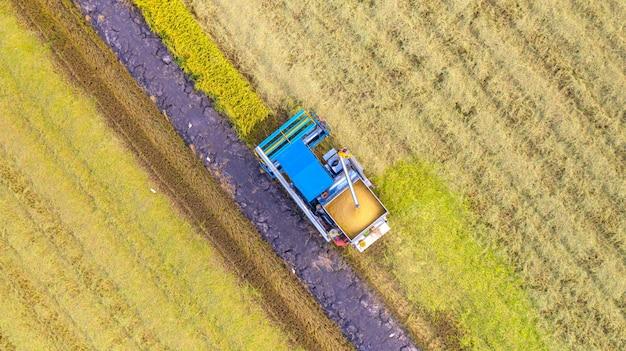 Vista superior aérea de la máquina cosechadora trabajando en el campo de arroz desde arriba