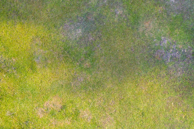 Vista superior aérea de textura de hierba natural