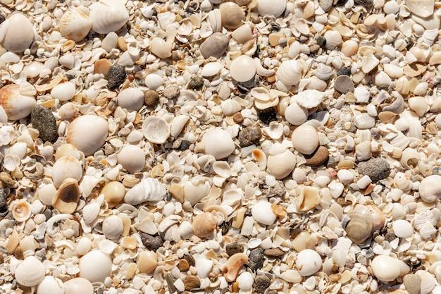 Vista superior de la arena de la playa con conchas marinas