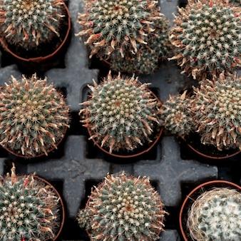 Vista superior arreglo con cactus en macetas