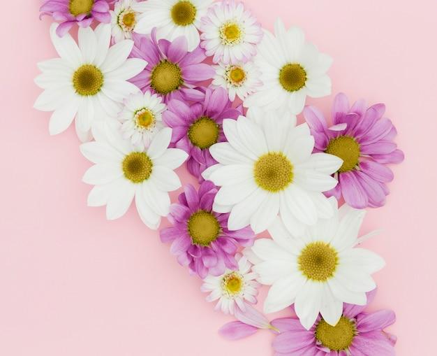 Vista superior arreglo floral sobre fondo rosa