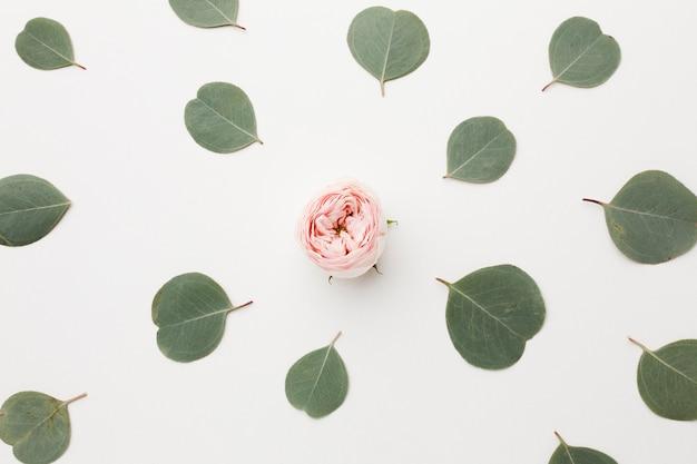 Vista superior del arreglo de hojas verdes y rosa en medio