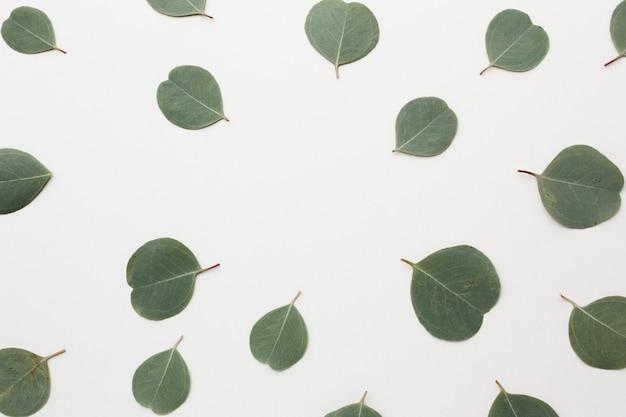 Vista superior del arreglo de hojas verdes