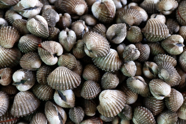 Vista superior de berberechos, pila de berberechos frescos, berberechos o vieiras mariscos crudos frescos, conchas de berberecho para la venta en el mercado