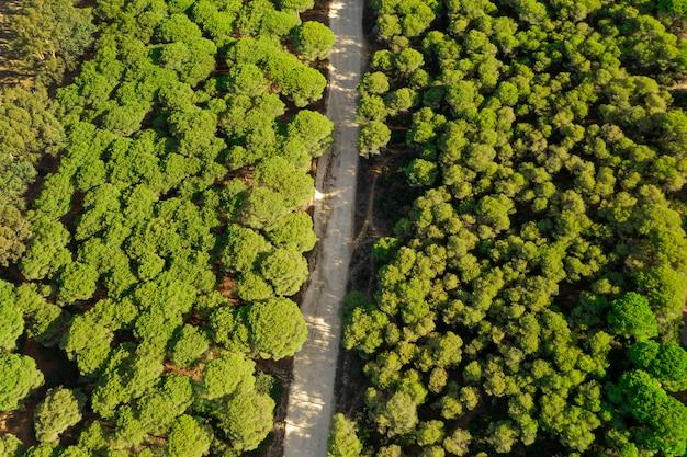 Vista superior del bosque verde y camino tomado por drone