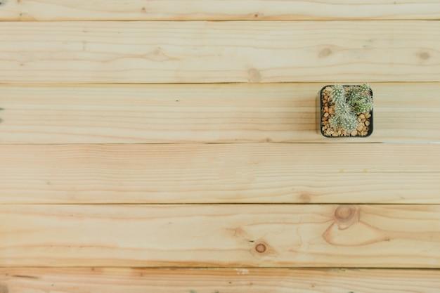 Vista superior de cactus sobre fondo de madera