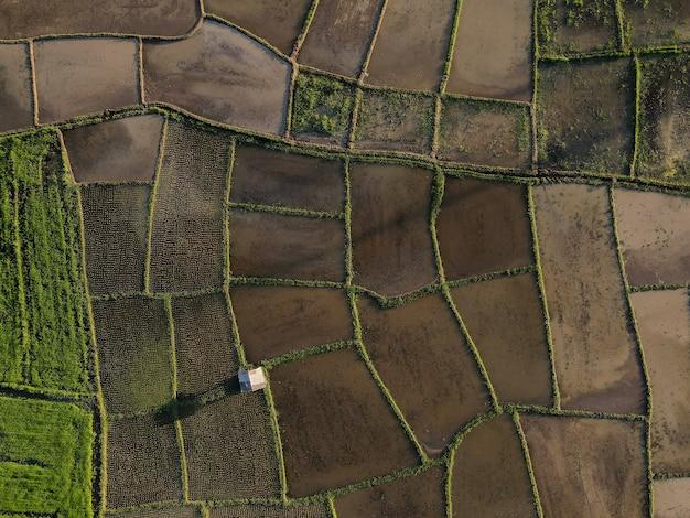 Vista superior del campo de arroz en terrazas verdes con una pequeña cabaña en el interior de tailandia,