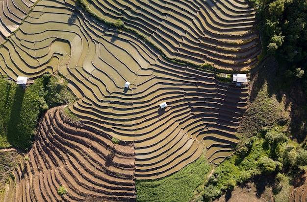 Vista superior del campo de arroz en terrazas