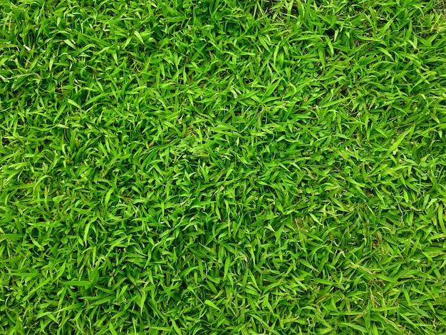 Vista superior cerrada del campo de hierba