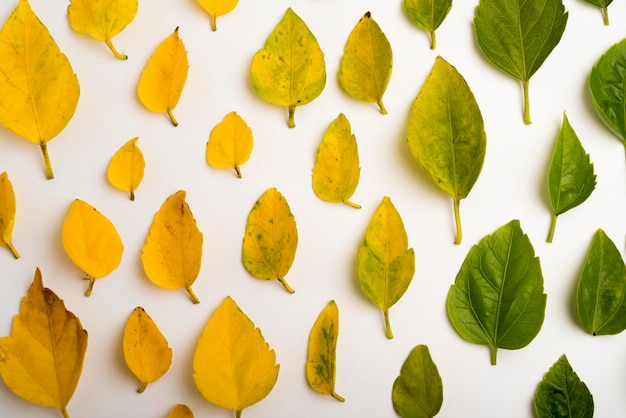 Vista superior colección de concepto de hojas de otoño