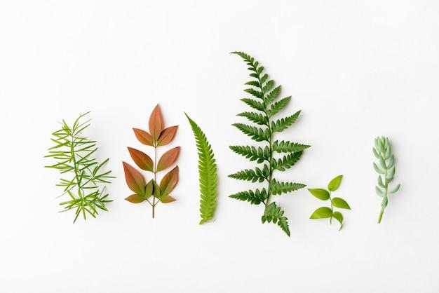 Vista superior colección de hojas de naturaleza