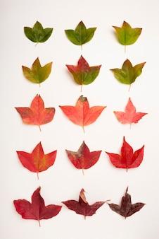 Vista superior colección de otoño hojas concepto