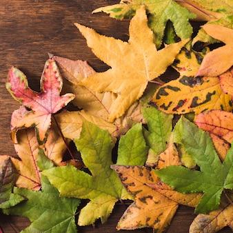 Vista superior colorido hojas de otoño