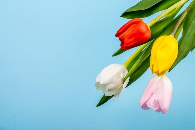 Vista superior de coloridos tulipanes aislados en mesa azul con espacio de copia