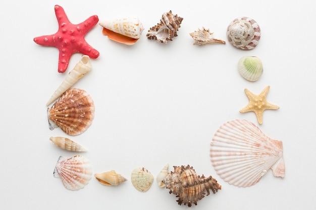 Vista superior del concepto de marco de conchas