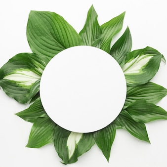 Vista superior del concepto de marco de hojas con espacio de copia