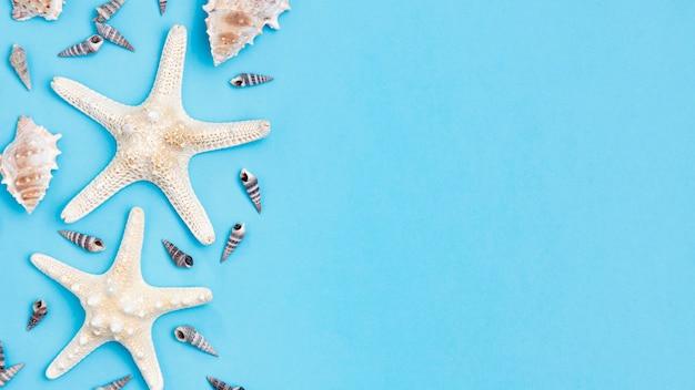 Vista superior de conchas de mar y estrellas de mar con espacio de copia