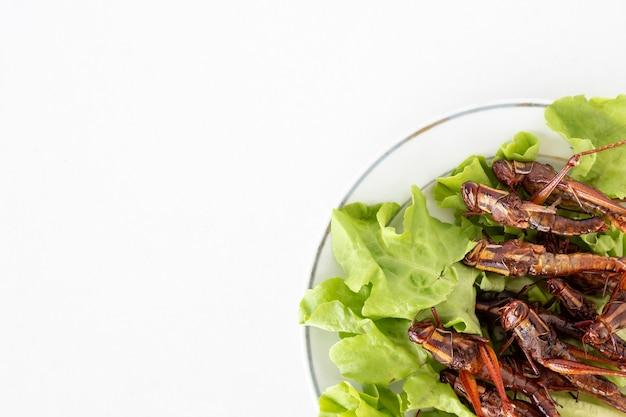 Vista superior de insectos fritos en plato en el fondo blanco. copia espacio
