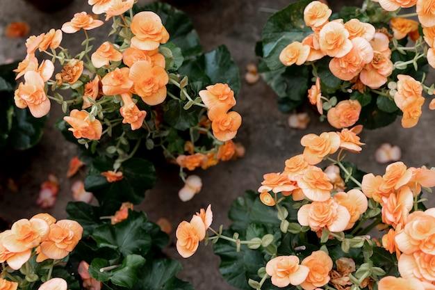 Vista superior decoración con flores naranjas