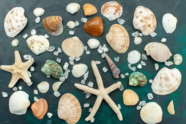 Vista superior de diferentes conchas marinas pequeñas conchas formadas diferentes en la superficie azul oscuro