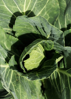 Vista superior ensalada verde orgánica