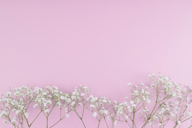 Vista superior fila de flores blancas