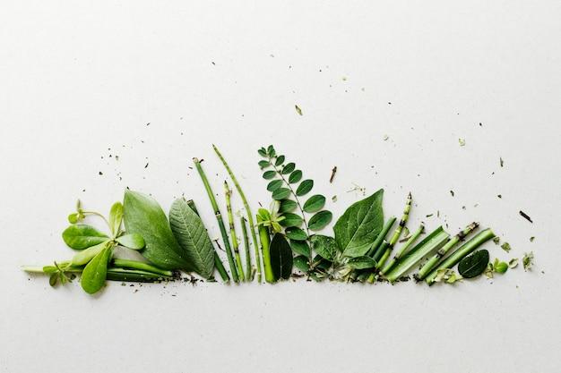 Vista superior fila hojas verdes