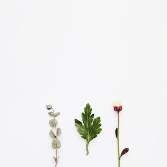 Vista superior fila de plantas con copy space