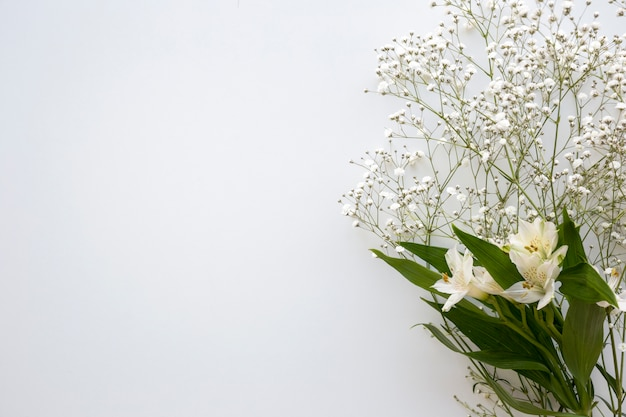 Vista superior de la flor de aliento y lirios blancos sobre fondo blanco