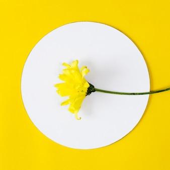 Vista superior flor amarilla con círculo