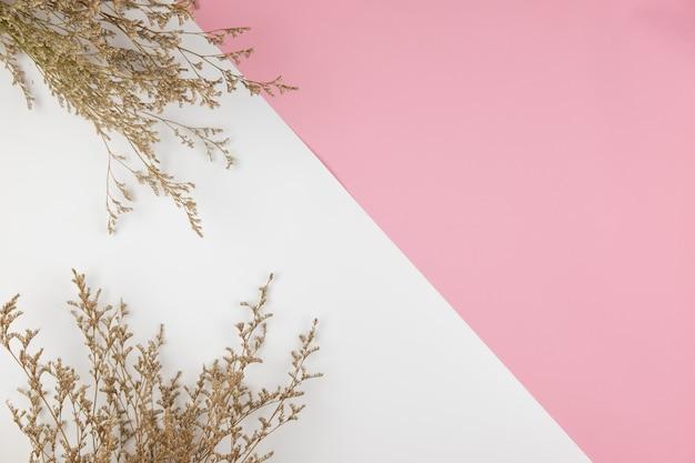 Vista superior de la flor de caspia blanca sobre fondo de color rosa y blanco