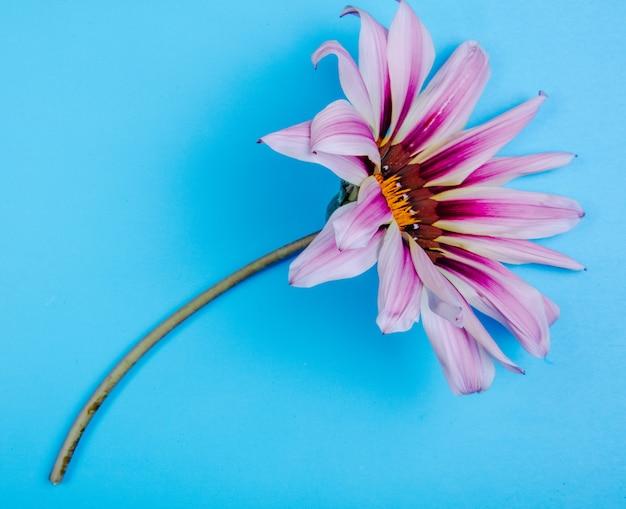 Vista superior flor morada sobre un fondo azul