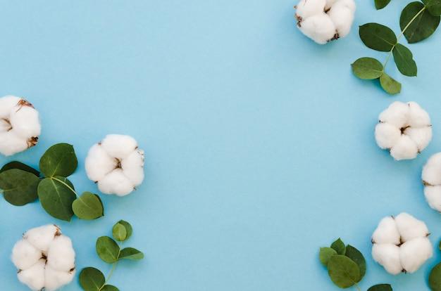 Vista superior de flores de algodón sobre fondo azul.