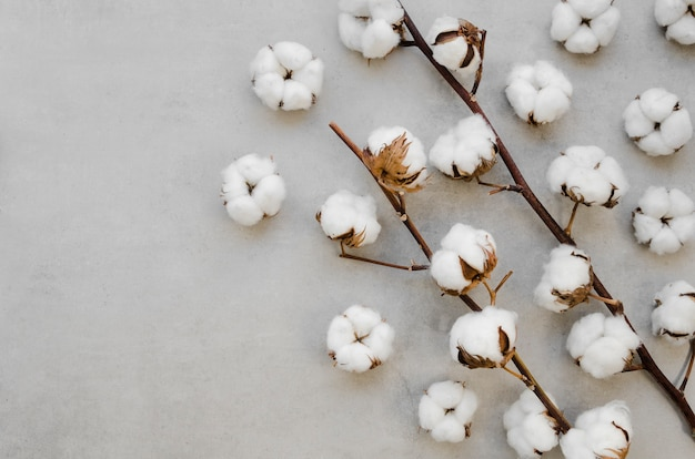 Vista superior de flores de algodón sobre fondo de estuco
