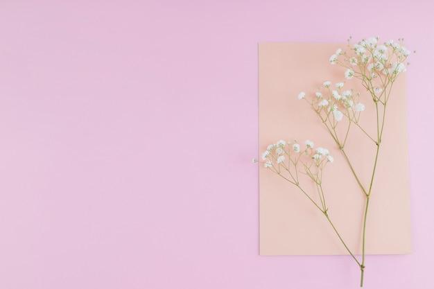 Vista superior flores blancas