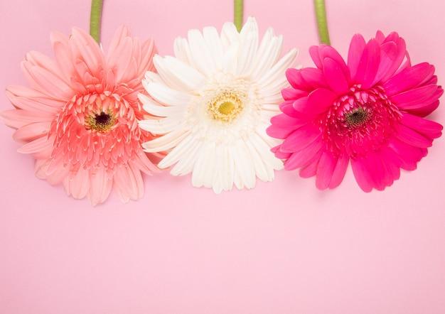 Vista superior de flores de gerbera de color rosa y fucsia blanco aislado sobre fondo rosa con espacio de copia